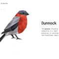 GEOMETRICAL BIRDS – SLIDESHOW